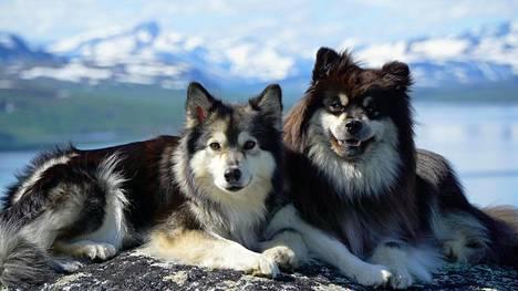 """Äijä-koiran hurmaava tyttöystävä Elsa tulee mukaan Eränkävijöihin – """"suhde ollut kiihkeä jo pitkään"""""""
