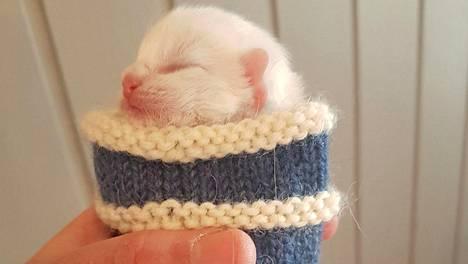 Kahden päivän ikäinen kissanpentu Ruuneperi matkusti villasukassa – hellyttävä näky