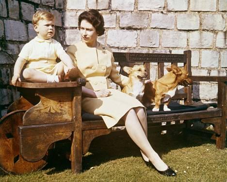 Kuningatar Elisabetillä on ollut elämänsä aikana yli 30 koiraa.