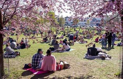 Roihuvuoressa oli lauantaina paljon väkeä ihastelemassa kukkivia kirsikkapuita. Väenpaljous on herättänyt myös huolta siitä, pystytäänkö turvavälejä pitämään.