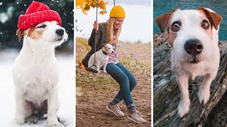 Maria Vanonen kuvaa koiraansa seikkailuillaan Suomessa ja ulkomailla.