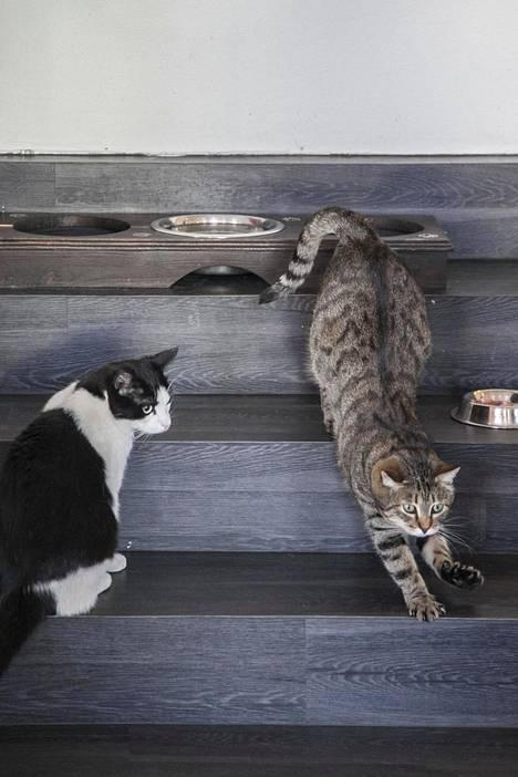 Kissakahvilassa voi ostaa lettuja ja paijata kissoja.