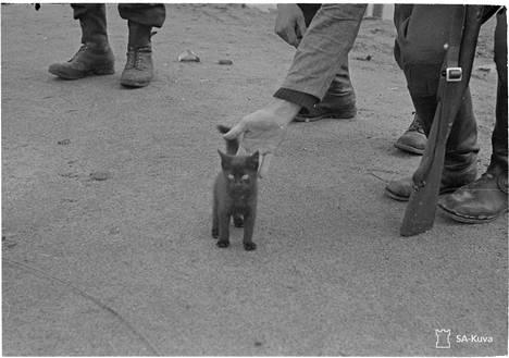 Pieni kissa Viipurissa 1941.08.29