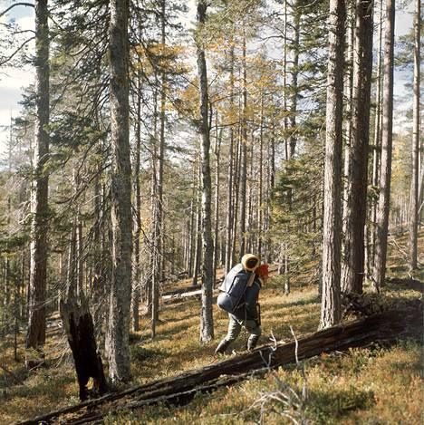 Vaeltaja Luoston maastossa vuonna 1976.