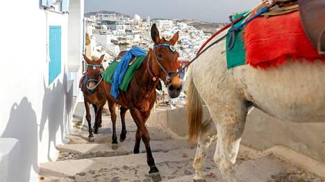 CNN: Suomalaisturistien suosima lomasaari kielsi aasilla ratsastamisen yli 100-kiloisilta matkailijoilta