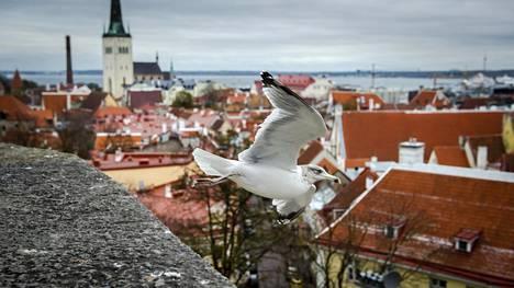 Viron palvelukulttuuri on noussut jälleen otsikoihin. Virossa asuva Harri Aaltonen kertoo, mistä ongelmat johtuvat.