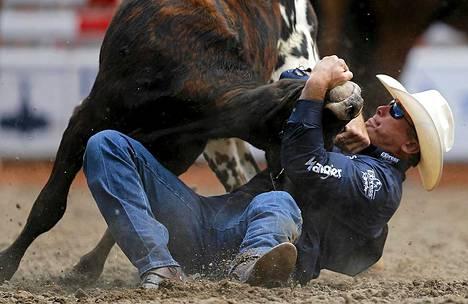 Nebraskalainen Dean Gorsuch pitelee härkää sarvista härkäpainissa.