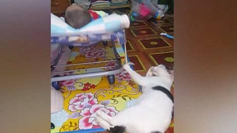 Kissan neuvokas tapa pitää vauvan tyytyväisenä