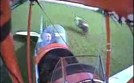 Hätälaskun tehnyt lentokone osui laskeutuessaan lehmään. Koneen vasen siipi iski ruskea-valkoisen friisiläislehmän maan tasalle.
