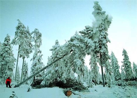 Suomalainen luonto voi jopa pelottaa, hotellinjohtaja Tiina Kaikkonen kertoo.