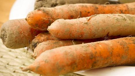 Porkkanoita.