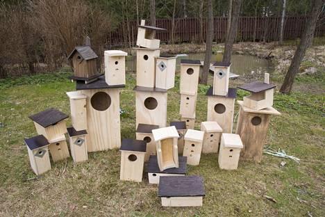 Luontotoimittaja Minna Pyykkö piti ajatusta miljoonasta linnunpöntöstä aluksi lähinnä huvittavana.