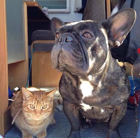Perheeseen kuuluu myös Alma-koira ja Karviainen-kissa.
