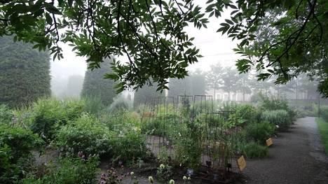 Usvainen sää luo puutarhaan salaperäistä tunnelmaa. Täällä on kaunista myös syksyllä!