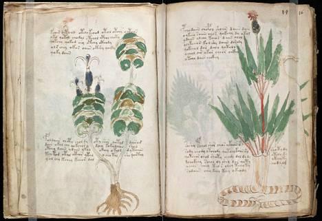 Suurin osa käsikirjoituksen kuvista liittyy kasveihin.