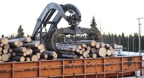 Sahayrittäjät uskovat, että puun käyttö rakentamisessa lisääntyy tulevaisuudessa.