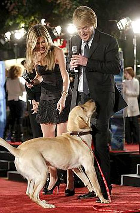 Tuon ottaisin! Jennifer Aniston ja Owen Wilson saivat punaisella matolla seurakseen Marley-koiran Marley ja minä -elokuvan ensi-illassa.