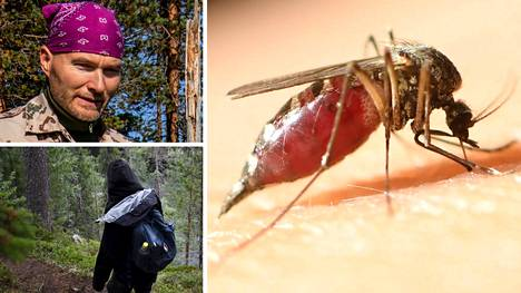 Miten suojautua hyttysiltä? Alan todelliset kokemusasiantuntijat kertovat.