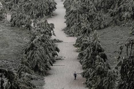 Mies kävelee vulkaanisen tuhkan peittämällä alueella.