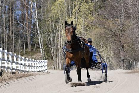Esa Lahtinen toivoo suomalaisen tähtihevosen pysyvän kotimaisemissaan huutokaupan jälkeenkin.