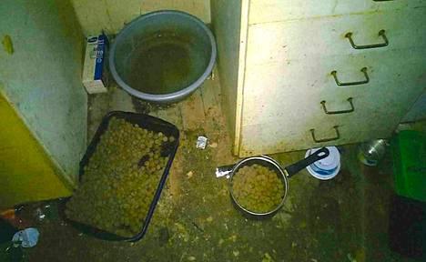 Kissanruoka oli naisen mukaan marketista loppu, joten hän toi kissoille koiranruokaa.
