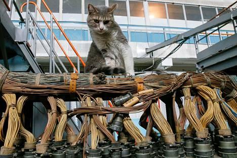 Kissa lentokonetehtaassa.