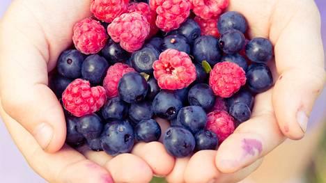 Marjojen, kasvisten ja hedelmien sisältämät kuidut ja vitamiinit voivat myös selittää tuloksia.