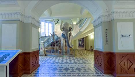 Museon ala-aulassa seisova poikkeuksellisen kookas afrikannorsu Elmeri on sävähdyttävä ilmestys.