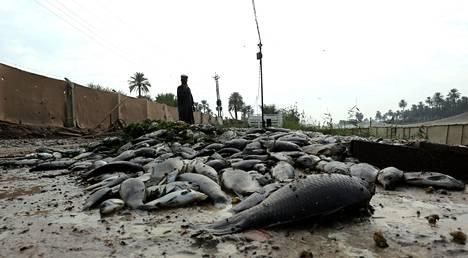 Kalanviljelijöille kalakuolemat ovat merkinneet valtavia taloudellisia menetyksiä.