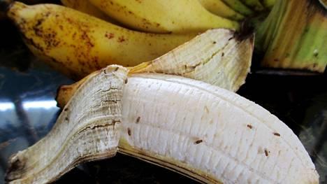Banaanikärpäsistä pääsee eroon, kun tuntee muutaman näppärän niksin.