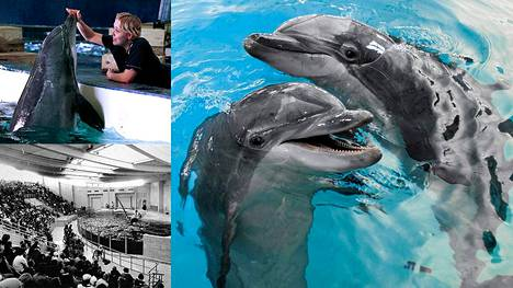 Särkänniemen delfiinit riemastuttivat huvipuistovieraita 30 vuotta.