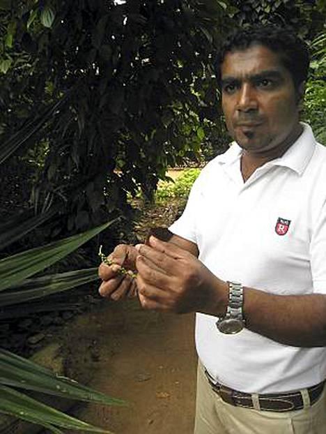 Herra Saldeen Nardeen on erinominen kauppamies. Hän pehmittää ensin luonnonkosmetikkayleisön arvuuttelemalla kasveja. Tässä on pippuri.