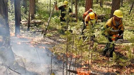Metsäpaloa sammutettiin Krasnojarskin alueella heinäkuussa.
