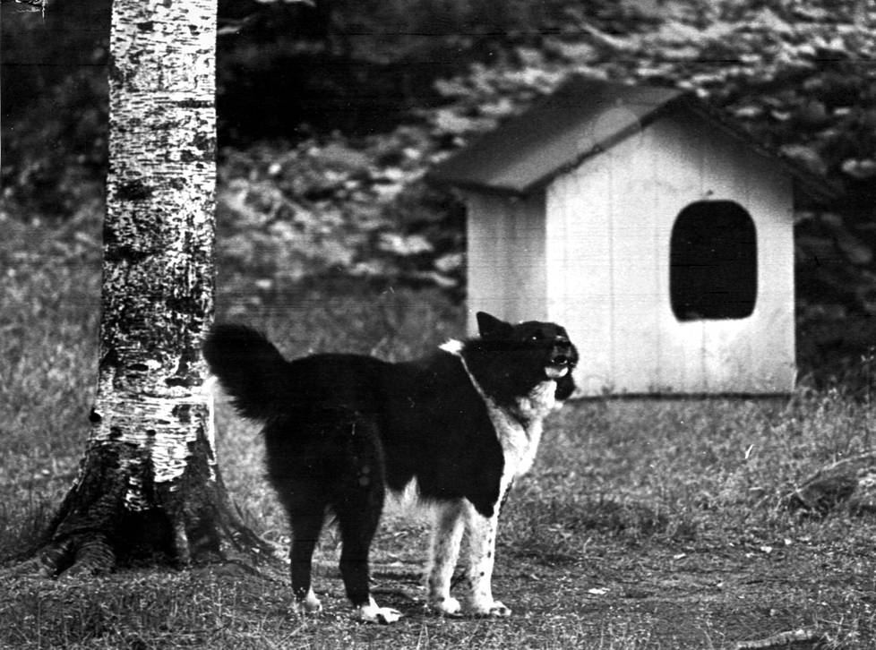 Eläkeläinen Aarne Asell oli ulkoiluttamassa Killiään, kun hän löysi Helenan ruumiin varhain aamulla elokuussa 1972.