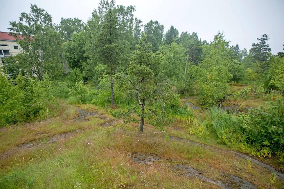 Puut ja lähin kerrostalo Puistokaarella ovat vallanneet pois purettujen parakkien pihapiirin.