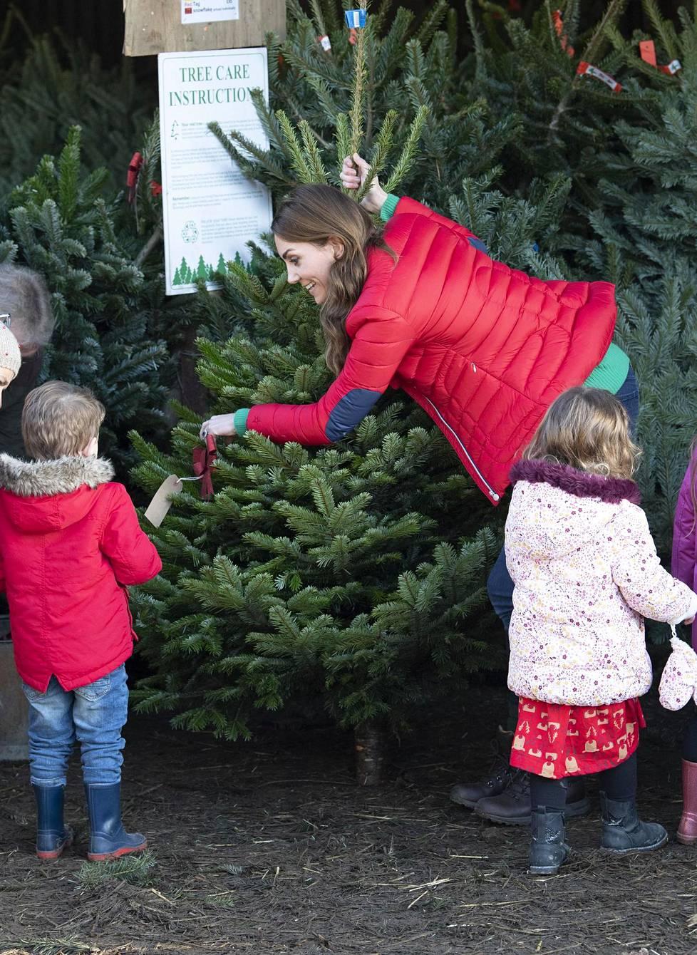 Herttuatar Catherine tutki joulukuusia joulukuun alussa vieraillessaan maatilalla.