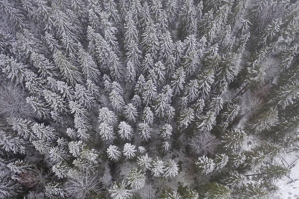 1900-luvun periaatteiden mukaan hoidettu 80-vuotias metsä voi olla lajistoltaan yksipuolisempi kun sen tilalle kasvatettava uusi metsä.