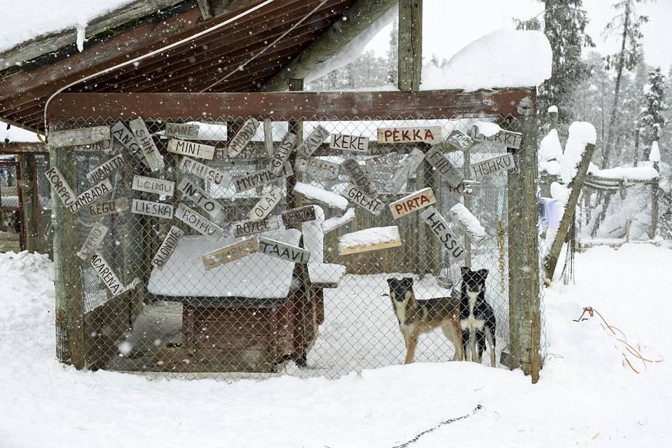 Myös lauman edesmenneiden jäsenten nimet on kerätty koira-aitauksien seinille.