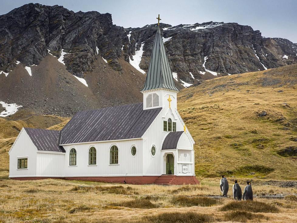 Kuningaspingviinit kirkkotiellä Etelä-Georgian saarella.