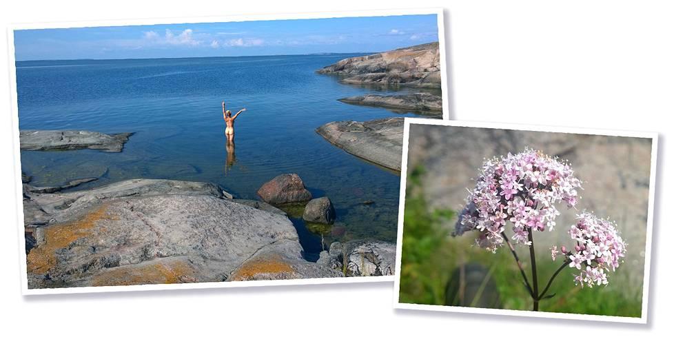 Uloimmilla luodoilla voi huoletta nautiskella rauhassa, muita ihmisiä ei näy mailla halmeilla. Rohtovirmanjuuri kukkii rantakivikossa.