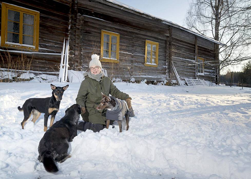 Kristiina Liinaharjan hoitama Vekkilän tila on 500 vuotta vanha. Porokoira Akka, australiankoolie Mora ja workingkelpienpentu Pimu ovat rakkaita Kristiina Liinaharjalle.