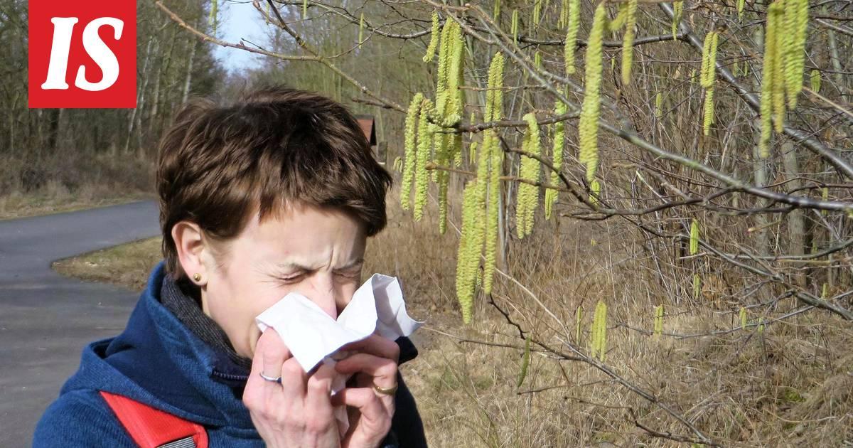 mustikka allergian oireet